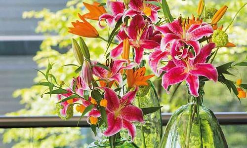 Companion Plants for Lilies, Species Lilies, Asiatic Lilies, Oriental Lilies, Trumpet Lilies, Easter Lilies, Companion Planting