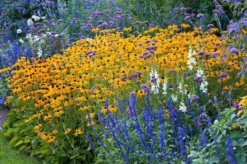 Summer, Summer Annuals, Summer Perennials, Summer Bulbs, Summer Flowers, Summer Borders, Summer Containers, Summer Plant Combinations, Summer Border Ideas, Plant Combination Ideas