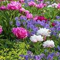 """<p><em style=""""font-size:12px; line-height:17px"""">GAP Photos/Christa Brand - Weihenstephan Gardens</em></p>"""