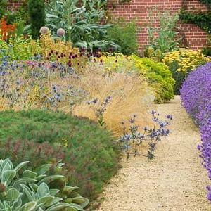 Garden Ideas, Landscaping ideas, pathway, walkway, Lavender path, Lavender 'Munstead', Lavandula Angustifolia 'Hidcote', Eryngium, Euphorbia, Achillea, Yarrow, Stachys Byzantina