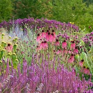 Garden Ideas, Border ideas, Perennial Planting, Perennial combination, Perennial Meadow, Monarda, Bee Balm, Echinacea pallida, Pale purple Conflower, stachys Hummelo, Jerusalem Sage, Phlomis, Piet Oudolf