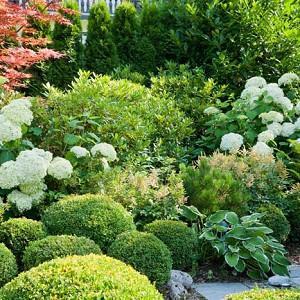 Garden Ideas, Border ideas, Perennial Planting, Perennial combination, Spring Borders, Summer Borders, Fall Borders, Shade gardens,  Bxwood, Buxus, Hydrangea Annabelle, Astilbe, Hosta