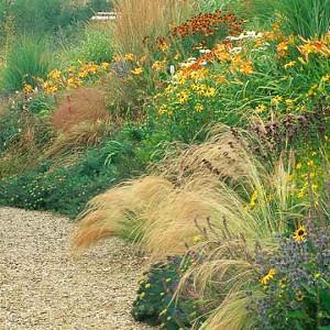Garden Ideas, Border ideas, Perennial Planting, Perennial combination, Summer Borders, Fall Borders, Liatris spicata, Gayfeather, Stipa, Rubeckia, hemerocallis, daylilies, prairie planting