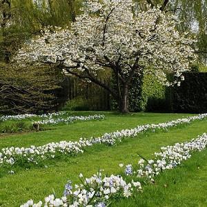 Spring Borders, Bulb Combinations, Perennial Combinations, Lawn ideas,chionodoxa Blue Giant, Glory of the snow Blue Giant, Anemone Blanda White Splendour, Muscari Azurerum Album, White Grape Hyacinth