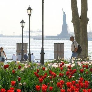 Spring Combination Ideas, Bulb Combinations, Plant Combinations, Flowerbeds Ideas, Spring Borders, Tulipa Estella Rijnveld, Tulipa Red shine, Tulip Estella Rijnveld, Tulip Red shine