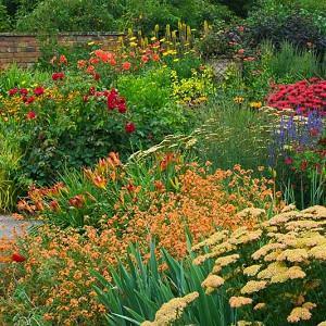 Garden Ideas, Perennial Planting, Perennial combination, Summer Borders, Fall Borders, Achillea 'Terracota', Monarda 'Gardenview Scarlet', Erysimum 'Apricot Delight',Hemerocallis 'Anzac'