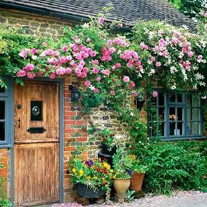Planting Roses, Rose Gardening, Designing with Roses, Bourbon Roses, climbing roses, garden roses, Rose bushes, Rose zephirine Drouhin, Clematis montana, Clematis grandiflora