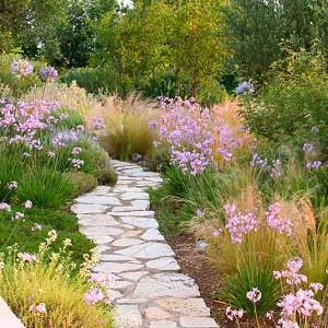 Garden Ideas, Landscaping Ideas, Drought Tolerant plants, Full sun plants, Mediterranean path, Mediterranean garden, Low water garden, Stipa tenuissima, Tubalghia violence, Society Garlic