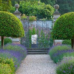 Garden Ideas, Landscaping ideas, pathway, walkway, Lavender path, lavandula Hidcote, Lavender Hidcote, Lavender types, Prunus lusitanica, Portugal Laurel, mediterranean path