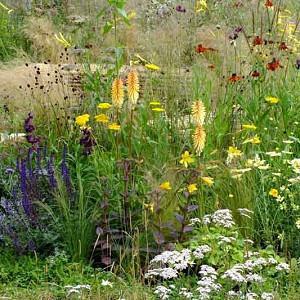 Summer borders, Garden Ideas, Border ideas, Perennial Planting, Perennial combination, Prairie Planting, Penstemon,Beardtongue, Salvia nemorocsa, Purple Sage, Stipa Tenuissima, Achillea, Kniphofia, Queen Anne Lace