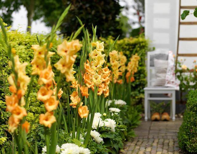 Plants for Hedges, Perennial Hedges, Evergreen Hedges, Flowering Hedges, Fragrant Hedges, Privacy Screens