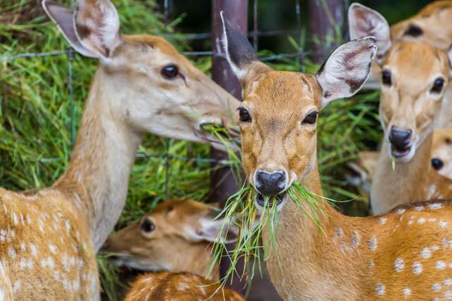 Deer resistant plants, Deer resistant bulbs, Deer resistant flowers, Deer resistant shrubs, Deer resistant trees, Deer resistant perennials, Deer resistant annuals