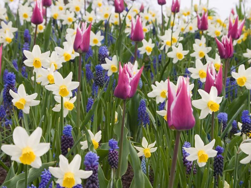 Spring, Spring Annuals, Spring Perennials, Spring Bulbs, Spring Flowers, Spring Borders, Spring Containers, Plant Combinations, Border Ideas, Plant Combination Ideas