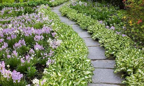 Garden ideas, Border ideas, Plant Combinations, Flowerbeds Ideas, Garden Paths, Walkways, Shady Borders, Shade Borders, Hosta Undulatta, Spanish Bluebells, Hyacinthoides Hispanica