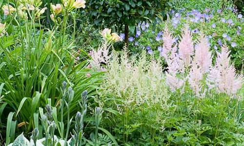 Garden Ideas, Perennial Planting, Perennial combination, Summer Borders, Fall Borders, Astilbe Diamant, Astilbe Europe, Hemerocallis Catherine Woodbury, Geranium Rozanne, Geranium Johnson Blue