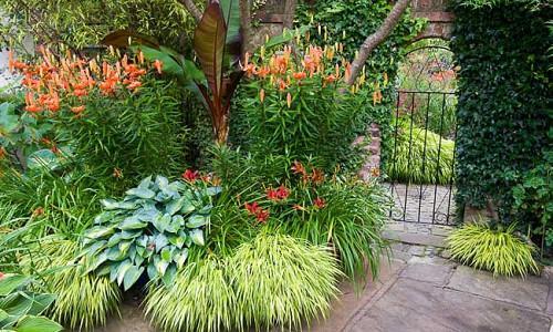 Garden Ideas, Perennial Planting, Perennial combination, Summer Borders, Fall Borders, Hakonechloa, Hosta June, Tiger Lilies, Lilium Tigrinum, hemerocallis Crimson Pirate