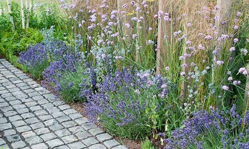 Garden Ideas, Border ideas, Perennial Planting, Perennial combination, Summer Borders, Lavender Hidcote, Hidcote Lavender, Munstead, Cosmos, Cosmos bipinnatus, Cosmos Antiquity, Cosmos Sonata, drought tolerant border