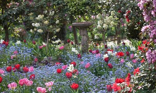 Spring Combination Ideas, Bulb Combinations, Plant Combinations, Flowerbeds Ideas, Spring Borders, Tulip Peach Blossom, Tulip Couleur Cardinal, Daffodil Thalia, Narcissus Thalia, Myosotis, Forget me not