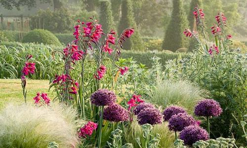 Plant Combinations, Flowerbeds Ideas, Spring Borders, Summer Borders, Allium , Stipa tenuissima, Gladiolus communis, Eryngium bourgatii, Sword-lilies