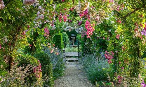 Rose Gardening, Designing with Roses, Climbing Roses, Rambling Roses, garden roses, Rose bushes, Rose Dorothy Perkins, Rose Princesse Louise, Arbors, Pergolas, Fragrant Climbing Roses