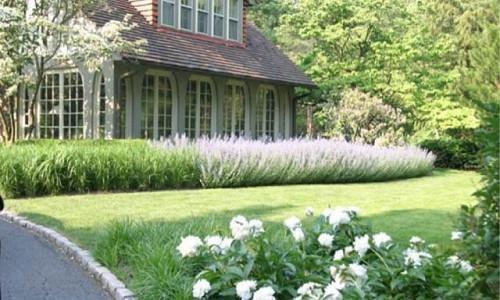 Garden Ideas, Landscaping Ideas, hedges, Russian Sage, Perovskia Atriplicifolia,front yard sweeps lavender,garden,landscape,lawn,meadow,plants, AHBL Landscape