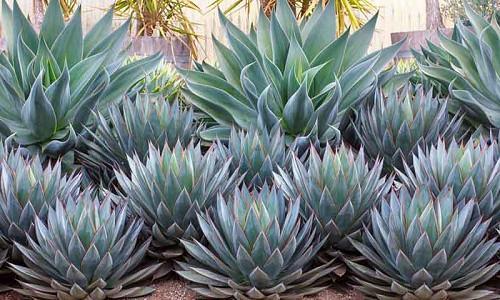 Planting Combination Ideas Inspiring Garden Ideas For All Gardeners