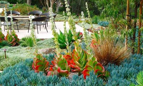 Plant Combination Ideas Family Agaves