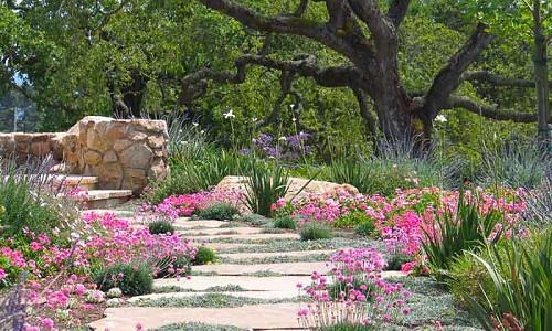 Plant Combination Ideas Plant Family Lavandula Lavenders