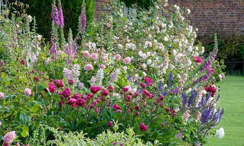 Spring Combination Ideas, Plant Combinations, Flowerbeds Ideas, Spring Borders, Summer Borders, Peonies, Paeonia Lactiflora, Roses, Calvia, Clary sage, Digitalis purpurea, Foxgloves