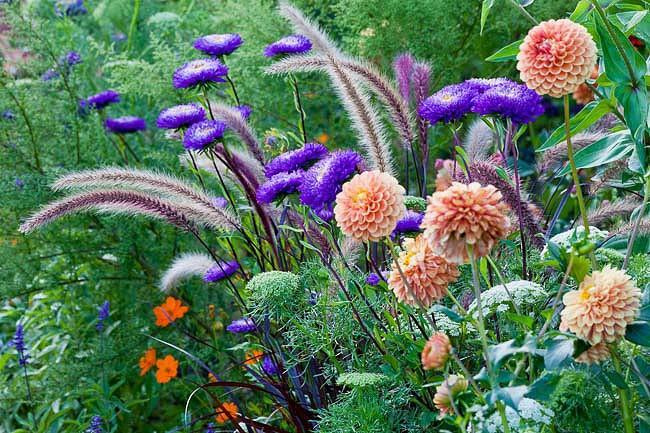 A Spectacular Summer Planting Idea With Dahlia Zinnia Chinese