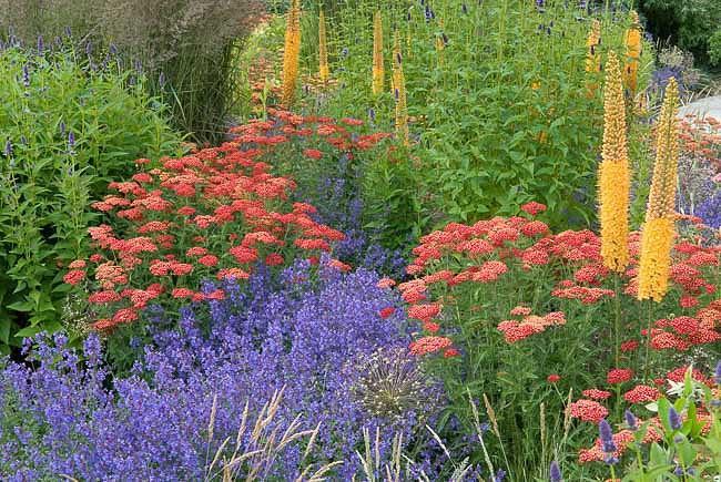 A Colorful Summer Planting Idea With Achillea Agastache Eremurus