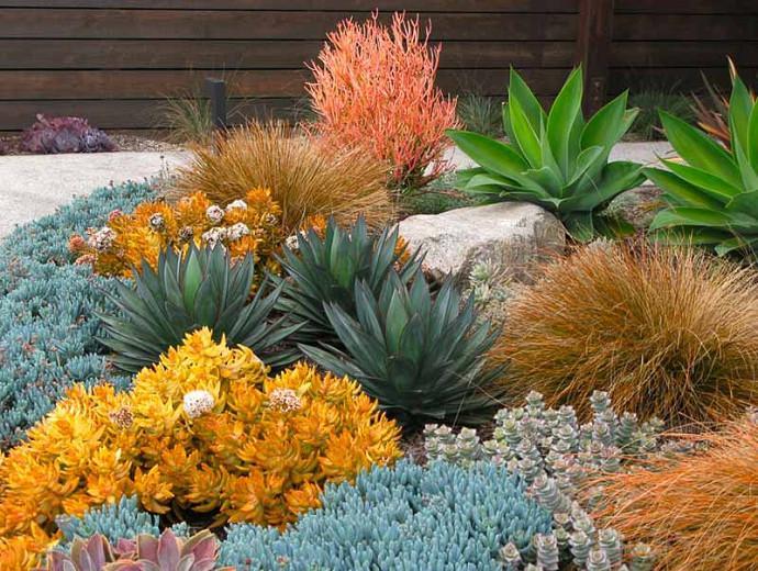 A Low Maintenance Succulent Border, Ideas For Low Maintenance Garden Borders