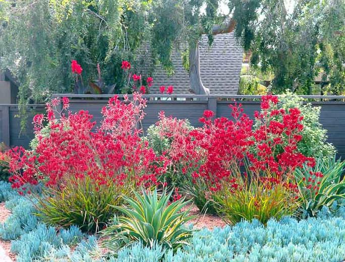 Low Maintenance Californian Garden, Ideas For Low Maintenance Garden Borders