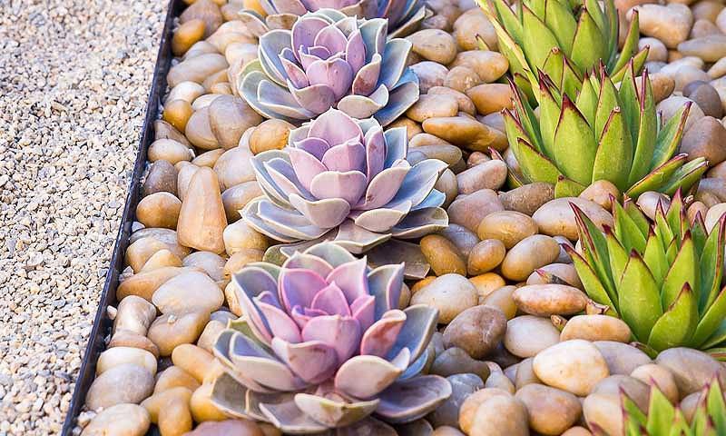 Garden Ideas, Landscaping Ideas, Small Garden, Small Backyard, Small Space, Studio H landscape,succulent garden, drought tolerant garden, waterwise garden, Zen garden, Mediterranean garden, e