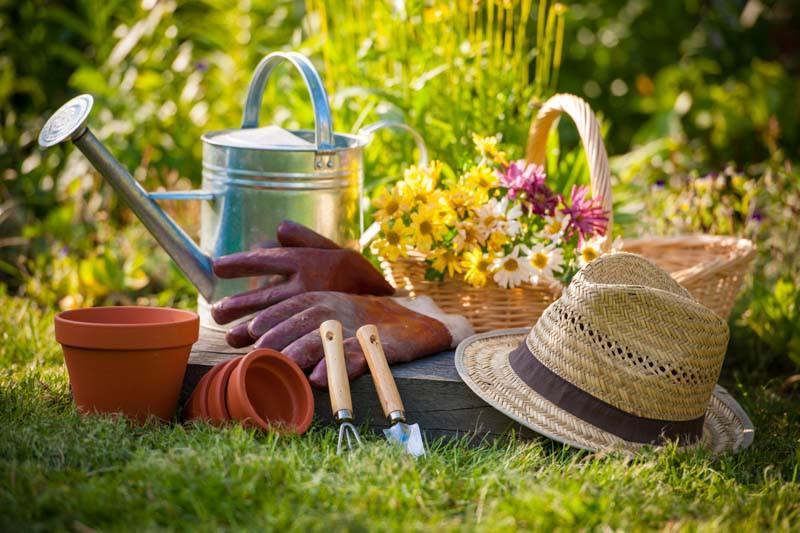 Garden tips, Gardening Tips, Gardening trick,