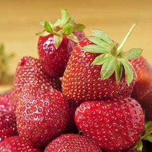 Fragaria × ananassa 'Jewel', Junebearing Strawberry 'Jewel', Strawberry 'Jewel', evergreen shrub, Strawberries, Red Fruit, White flowers