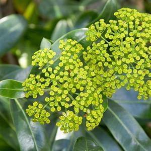 Best Shrubs For Mediterranean Gardens In Cool Countries