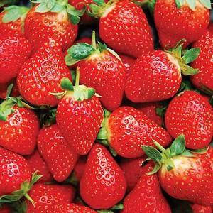 Fragaria × ananassa 'Honeoye', Junebearing Strawberry 'Honeoye', Strawberry 'Honeoye', evergreen shrub, Strawberries, Red Fruit, White flowers
