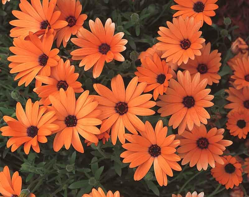 Gardenia Landscaping Garden Ideas