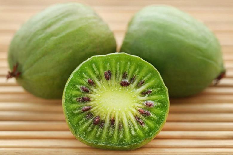 Actinidia arguta 'Issai', Hardy Kiwi Vine 'Issai', Bower Actinidia 'Issai', Hardy Kiwi 'Issai', Tara Vine 'Issai', Yang Tao 'Issai', Kiwifruit, Kiwi Fruits, Vines, Climbers, Kiwi Vine