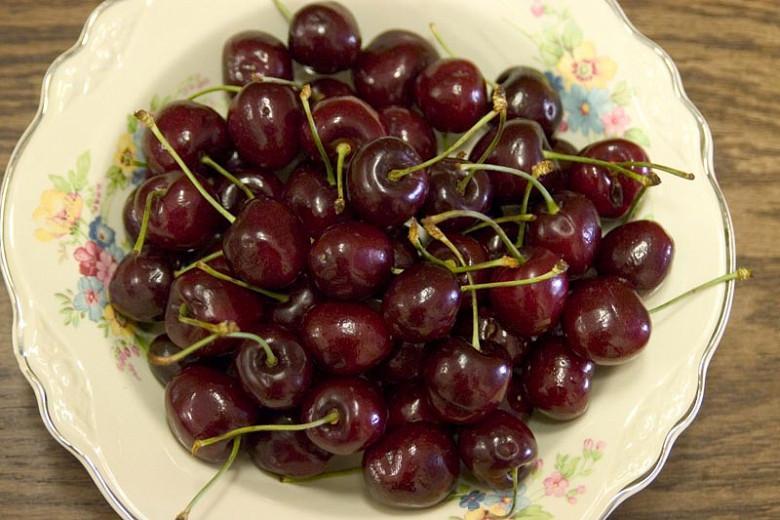 Prunus avium 'Black Tartarian', Sweet Cherry 'Black Tartarian', Black Tartarian Sweet Cherry, White flowers, Spring Flowers, Cherry tree, Cherries, Red Cherries, Fruit tree