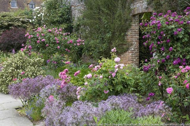 Allium Cristophii, Allium Christophii, Star of Persia, Allium Albopilosum, Ornamental Onion, Spring Bulbs, Spring Flowers , Purple Onions, Late Spring Bloom, Early Summer Bloom,