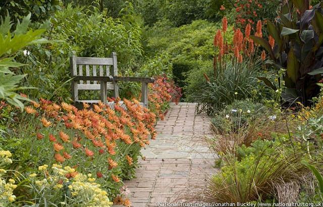 Arctotis, arctotis x hybrida, Arctotis x hybrida Flame, Drought tolerant flowers, Orange flowers, orange African Daisies