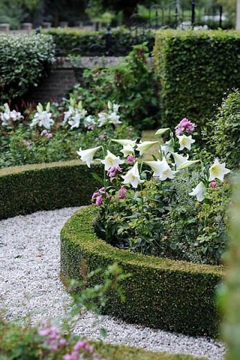 Lilium Longiflorum 'White Heaven' ,Lily 'White Heaven', Trumpet Lily 'White Heaven', Lilium 'White Heaven', Longiflorum Lilies, White Lilies, Fragrant Lilies, Lily flower, Lily Flower