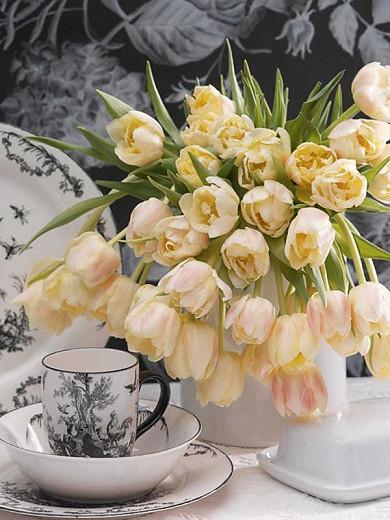 Tulipa 'Montreux',Tulip 'Montreux', Double Early Tulip 'Montreux', Double Early Tulips, Spring Bulbs, Spring Flowers,Tulipe Verona, Double White Tulip, White Tulip, Double Yellow Tulip, Yellow Tulip