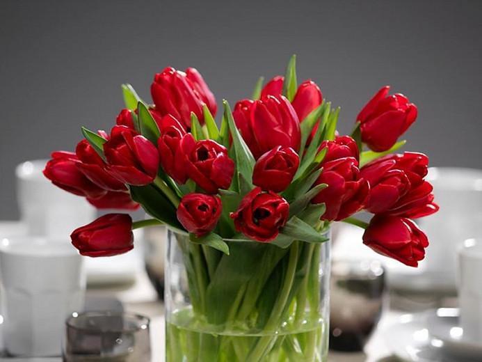 Tulipa Ile de France,Tulip 'Ile de France', Triumph Tulip 'Ile de France', Triumph Tulips, Spring Bulbs, Spring Flowers, Tulipe Ile de France,Red Tulips, Tulipes Triomphe, Mid spring tulips