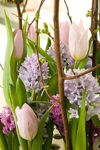 Hyacinthus 'Anna Liza',Hyacinthus 'City of Bradford',Tulip 'Candy Prince'