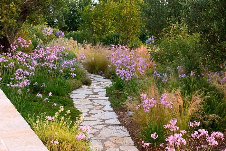 Tulbaghia Violacea, Society Garlic, Pink Agapanthus, Spring Bulbs, Spring Flowers, Spring Bulbs, Spring Flowers, Pink Flowers