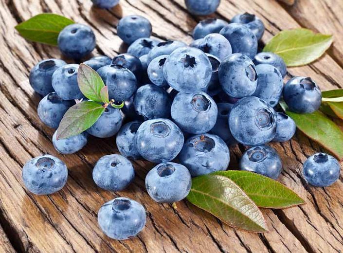 Vaccinium corymbosum 'Bluecrop' (Highbush Blueberry)