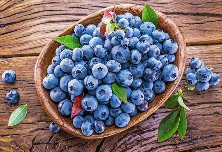 Vaccinium Blueray, Highbush Blueberry 'Blueray', Blueberry 'Blueray', Berries, Blue Berries
